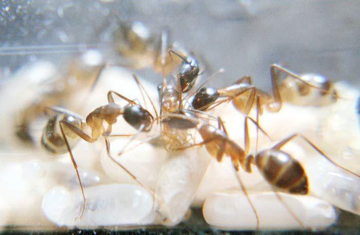 Рождение муравья (10 фото)