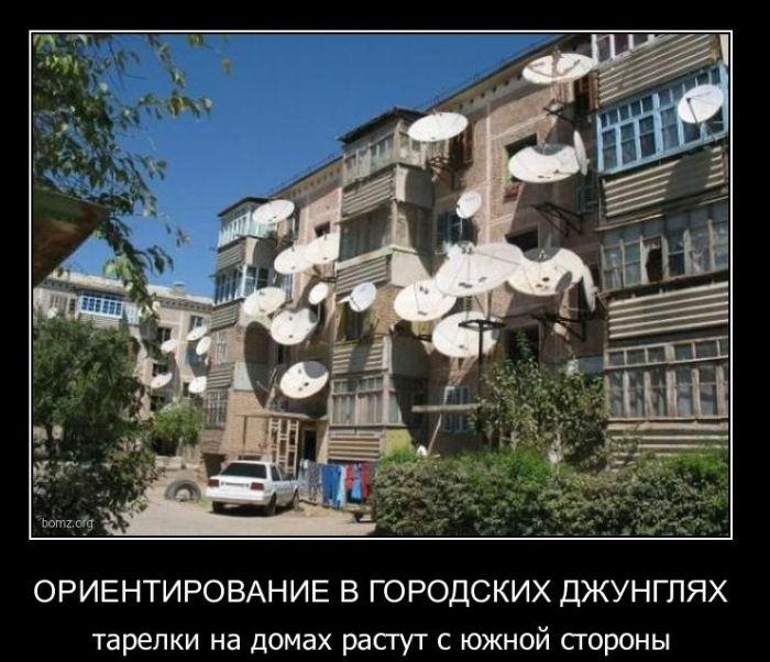 Демотиваторы (51 фото)