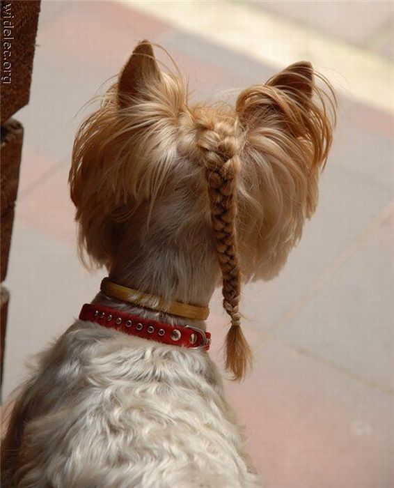 http://trinixy.ru/pics4/20101130/funny_dogs_16.jpg