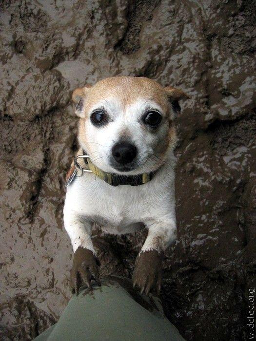 Смешные собаки (110 фото)