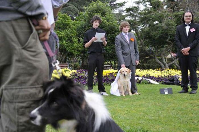 Мужчина женился на своей собаке (17 фото)