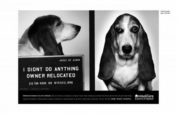 Социальная реклама о защите животных (100 фото)