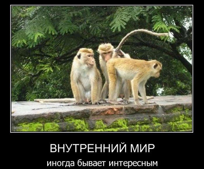 Демотиваторы (60 фото)