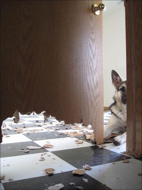 Хорошая собачка (2 фото)