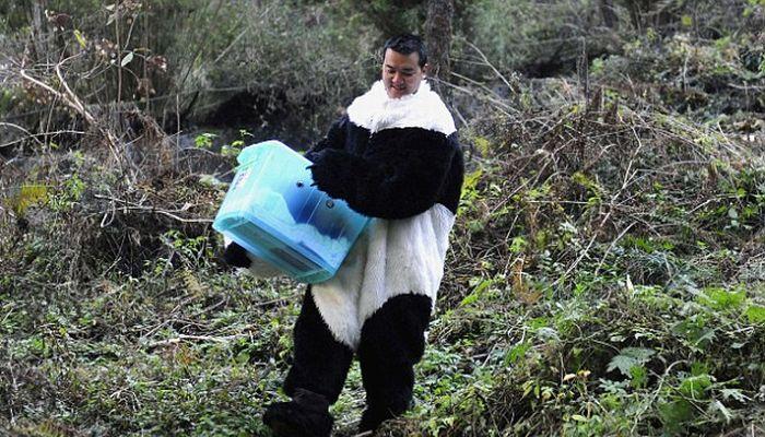 Ученые в костюмах панд (4 фото)