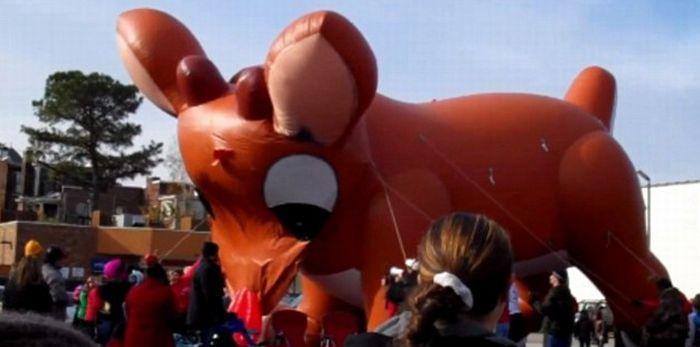 Огромный надувной олень лопнул (6 фото + видео)