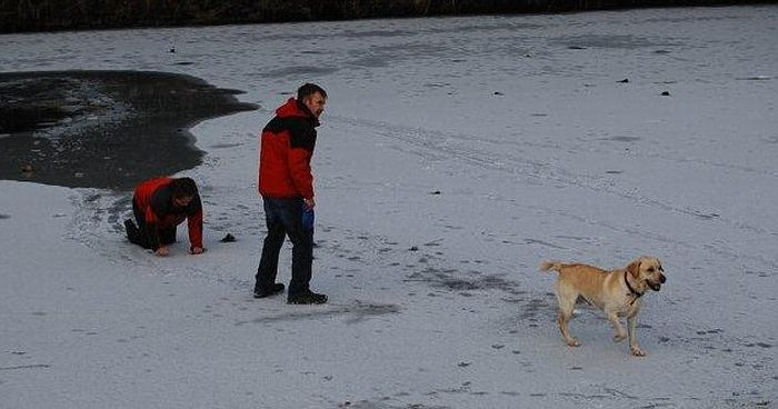 Хозяйка собаки чуть не погибла, спасая питомца (4 фото)