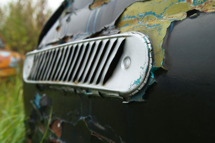 Пастбище автомобилей (30 фото)