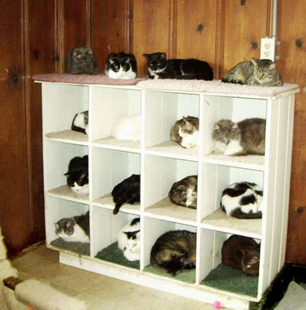 Как правильно разложить котов по полочкам (15 фото)