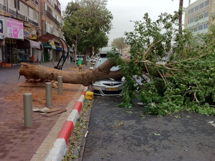 Дерево уничтожило автомобиль (9 фото)