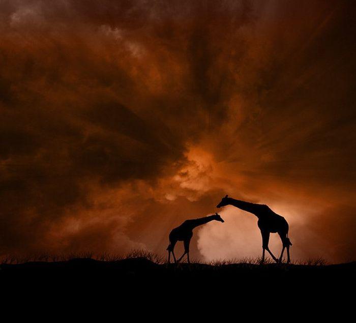 Красивые фотографии, обработанные в Фотошопе (34 фото)