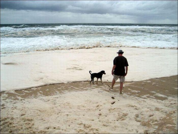 Странная пена на берегах Австралии (15 фото)