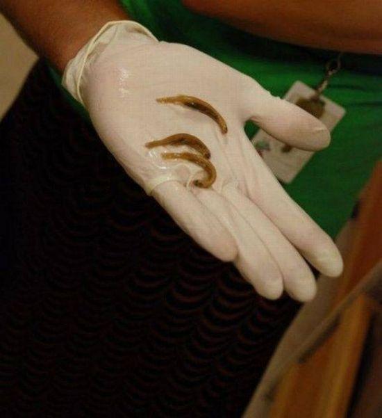 pez parasito