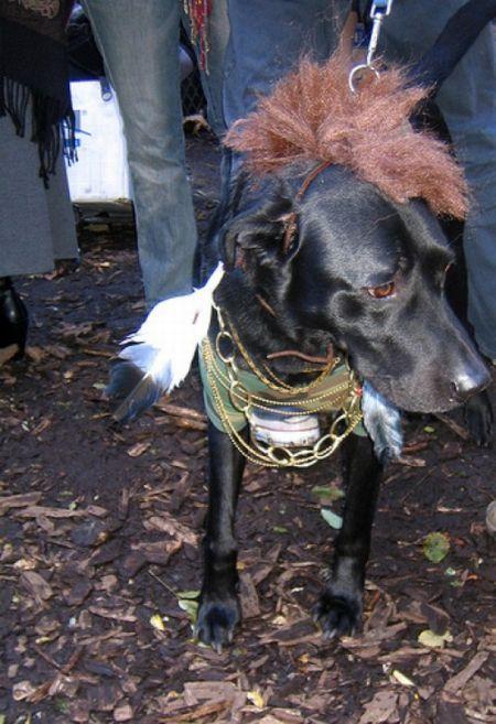 Люди и одна собака, одетые как Мистер Ти (25 фото)