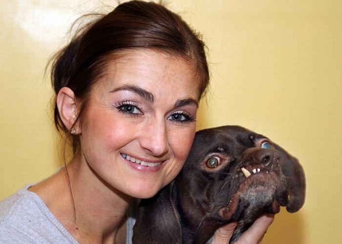 Самая уродливая собака Британии (3 фото)