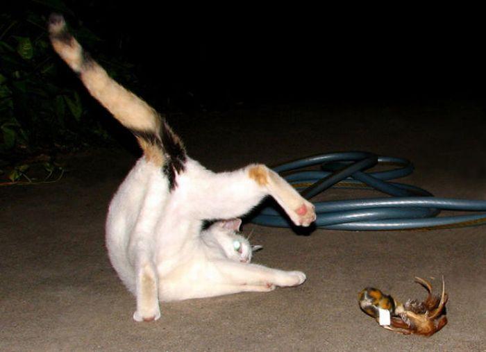 Коты в странных позах (49 фото)
