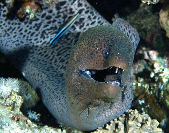 ...уродливые и страшные рыбы (21 фото).  Материал предоставлен сайтом.