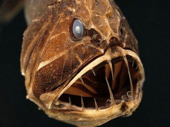Самые уродливые и страшные рыбы (21 фото)