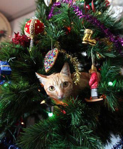 Коты в новогодних елках (20 фото)