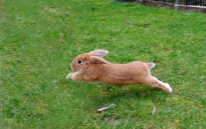 Кролики (40 фото)