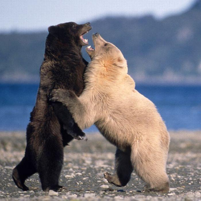 Лучшие фотографии животных 2010 (30 фото)