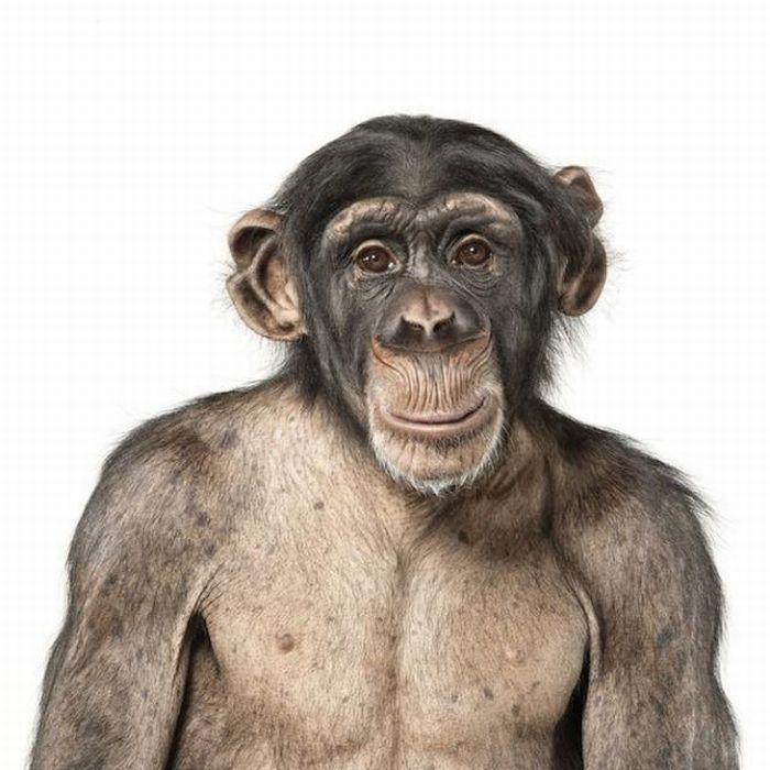 Красивые портреты животных (25 фото)