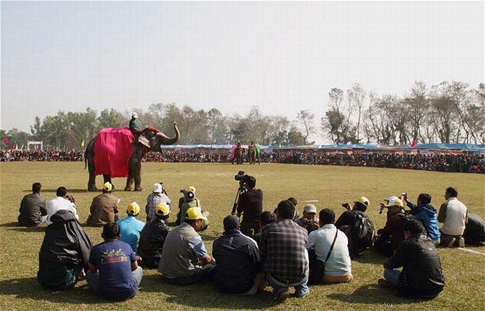 Конкурс красоты среди слонов (15 фото)