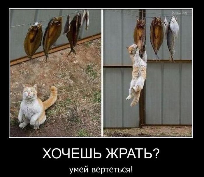 http://trinixy.ru/pics4/20110105/demotivatory_12.jpg