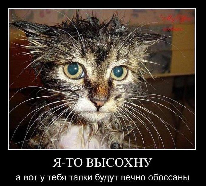 http://trinixy.ru/pics4/20110106/demotivatory_35.jpg