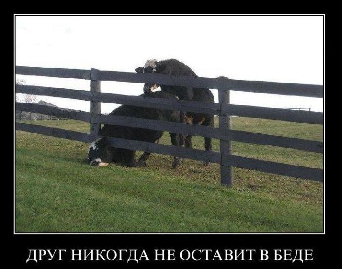 http://trinixy.ru/pics4/20110110/demotivatori_08.jpg