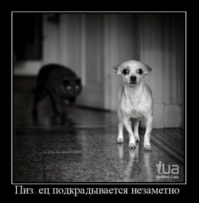 http://trinixy.ru/pics4/20110110/demotivatori_11.jpg