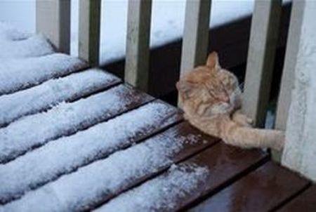 Котенок доигрался (6 фото)