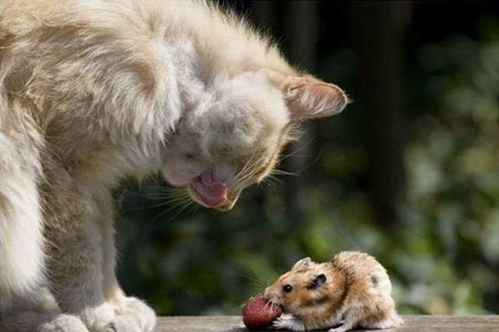Кот и мышка (4 фото)
