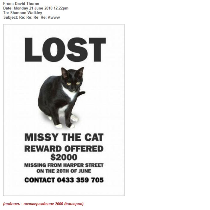 Пропала кошка (13 картинок)