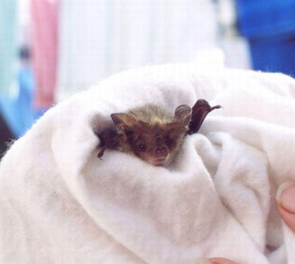 Спасенные летучие мыши (21 фото)