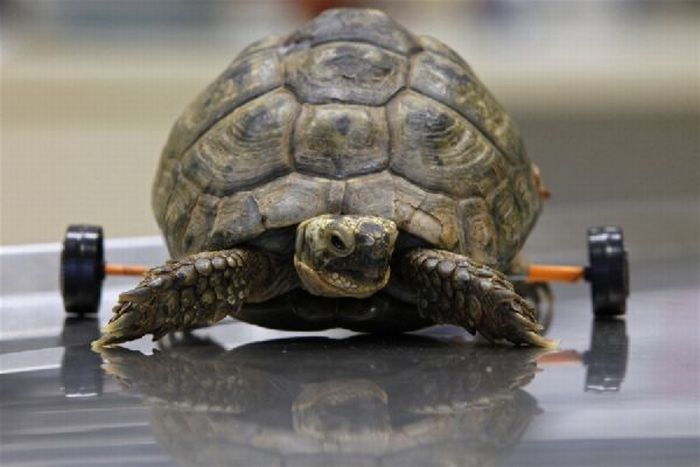 Спасение черепахи (3 фото)