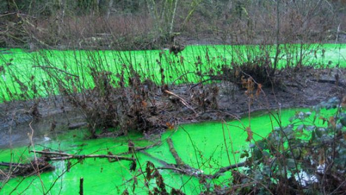 Зеленая река (17 фото + видео)
