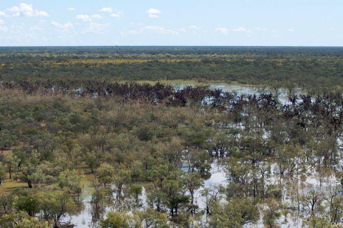 Загадка дня. Что с теми деревьями вдалеке (9 фото)