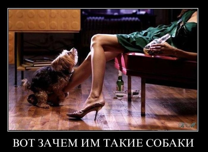 http://trinixy.ru/pics4/20110119/demotivatory_36.jpg