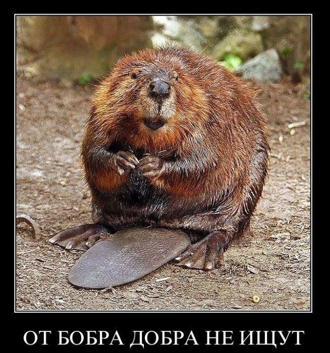 http://trinixy.ru/pics4/20110119/demotivatory_37.jpg