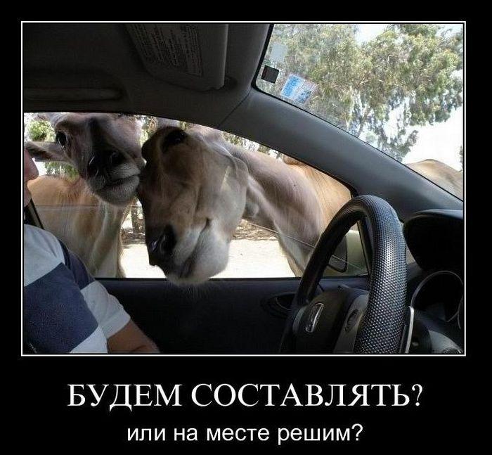 http://trinixy.ru/pics4/20110119/demotivatory_50.jpg