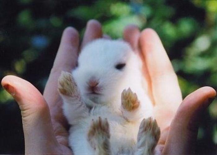Фото маленький белый кролик в руках.