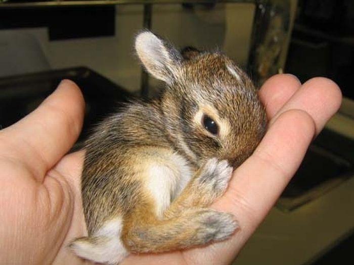Крошечные прикольные животные (37 фото)