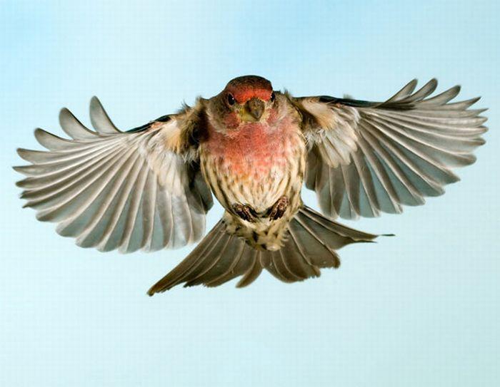 DataLife Engine Версия для печати Птицы в полете (15 фото)