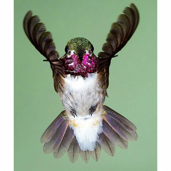 Птицы в полете (15 фото)