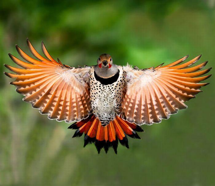 Птицы в полете (15 фото).  Прикольные картинки.
