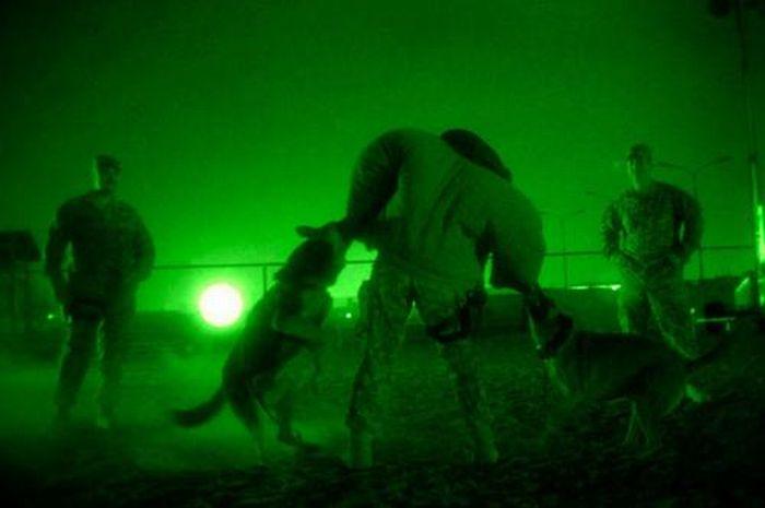 Собаки на службе в армии (28 фото)