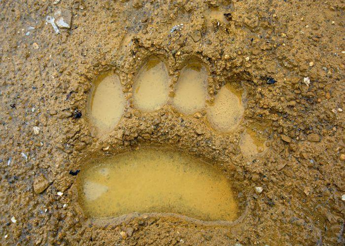 След медведя (7 фото)
