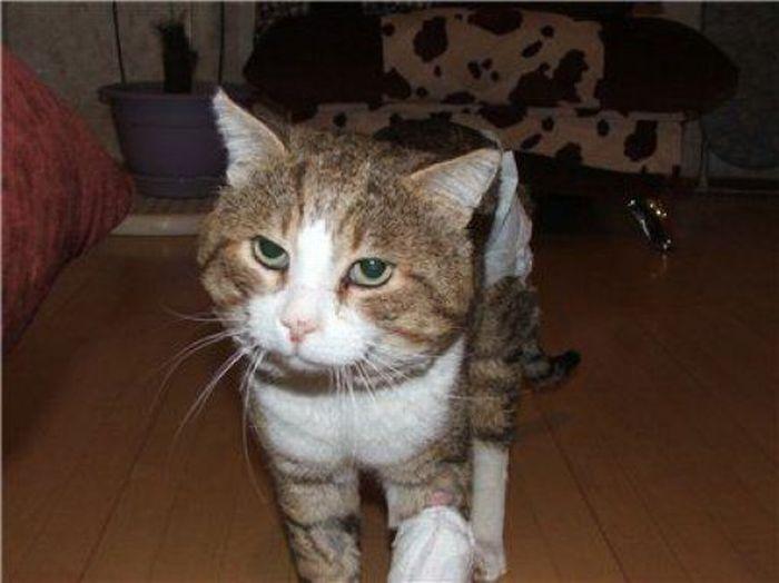 Gatitos rescatados (antes y despues)de la calle