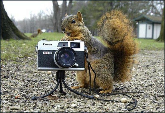 Прикольные картинки (80 фото)